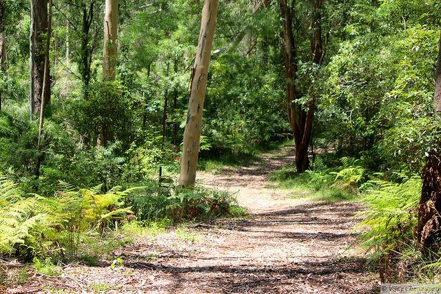 Belrose forest