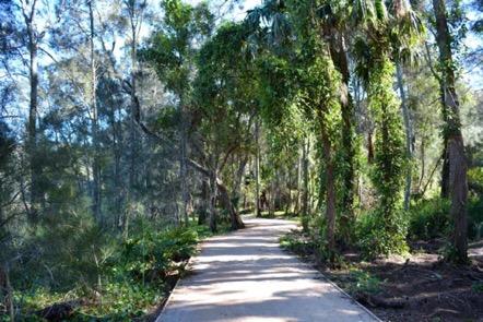 Wheeler Heights bush trail