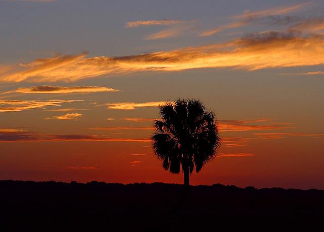 Bilgola sunset