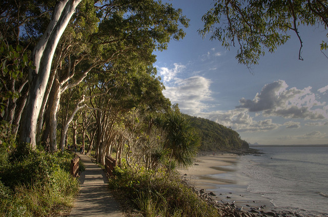Brookvale beach