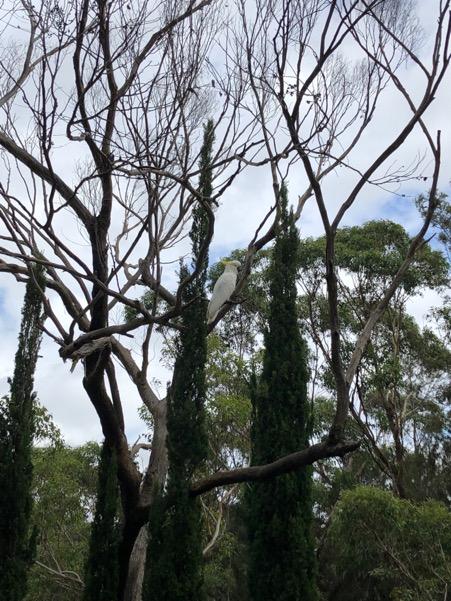 Wheeler Heights birds