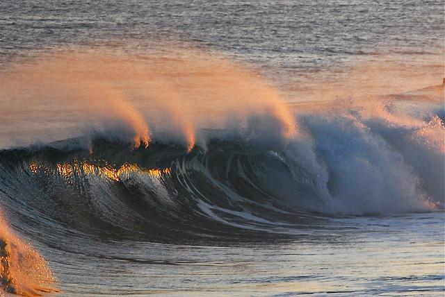 Bilgola wave
